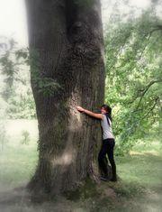 Baum Naturschutz Wiki